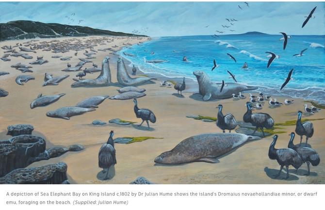 King Island extinct Emu - egg found in the sand dunes...