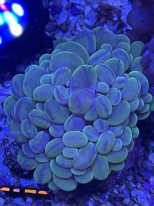 Green marble bubble WYSIWYG