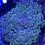 Thumbnail: Green marble bubble WYSIWYG