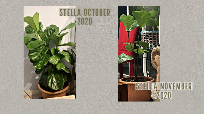 This girl was thriving then my parents came to visit and Stella lived in the guest room. They left and Stella became a nudist.