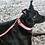 Thumbnail: DOGUE Plain Jane Collars