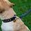 Thumbnail: DOGUE MAN Leather Collars