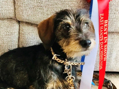 EH Dachshund and DOGUE UK help raise funds for Phoenix re-homing