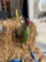Pic vert Arrosoir&Persil