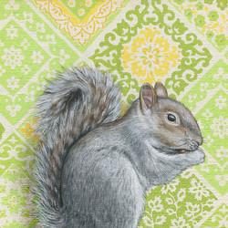 squirrel-8x10-webs