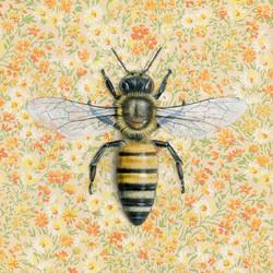 honeybee-yellow-8x8-web