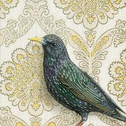 starling-web
