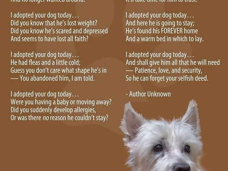 I Adopted Your Pet Today - A Parody to a Polarizing Poem