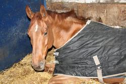 cheval danae 2.jpg