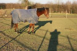 cheval Pyramide