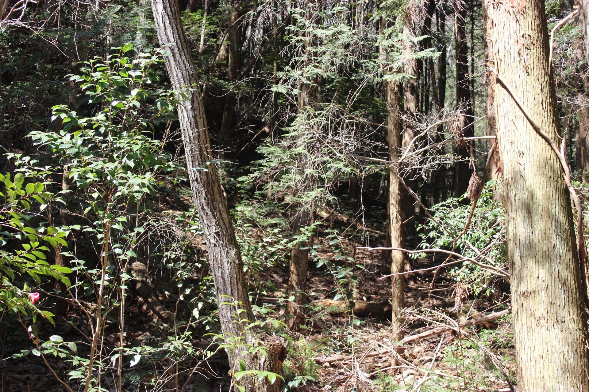 吉備中央町の山林