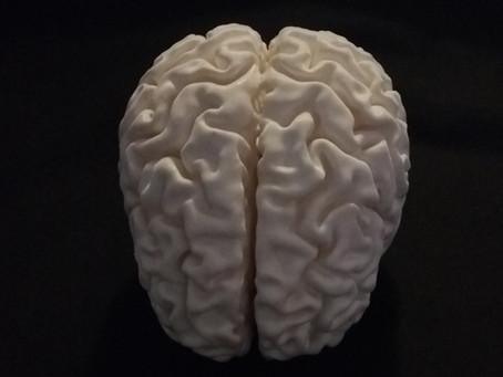 Un cervello stampato in 3D.