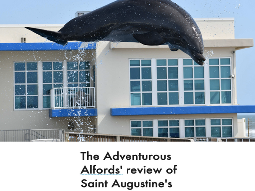 A Dolphin Experience in Saint Augustine