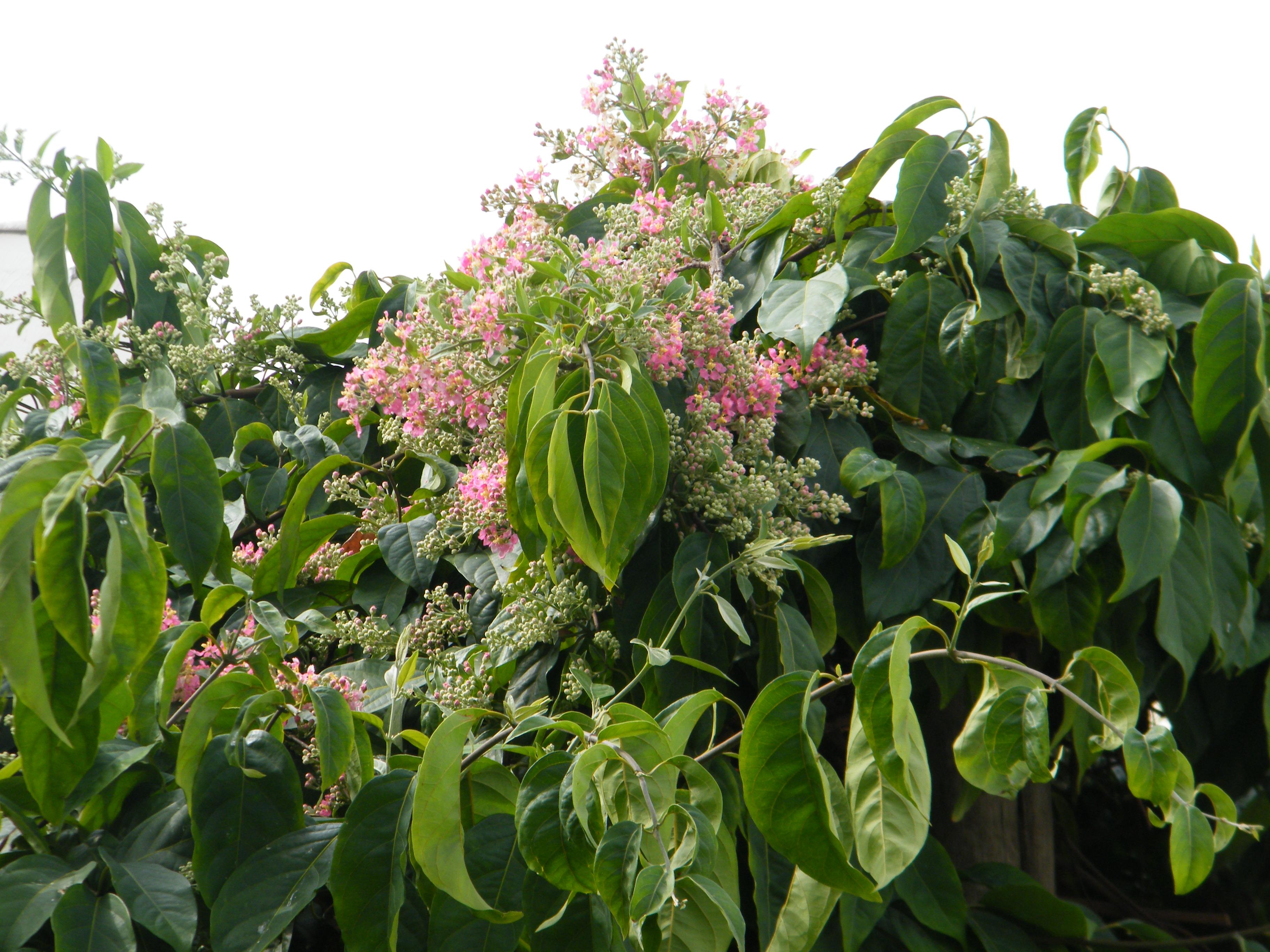 Florada Julho 2015 - 07.JPG