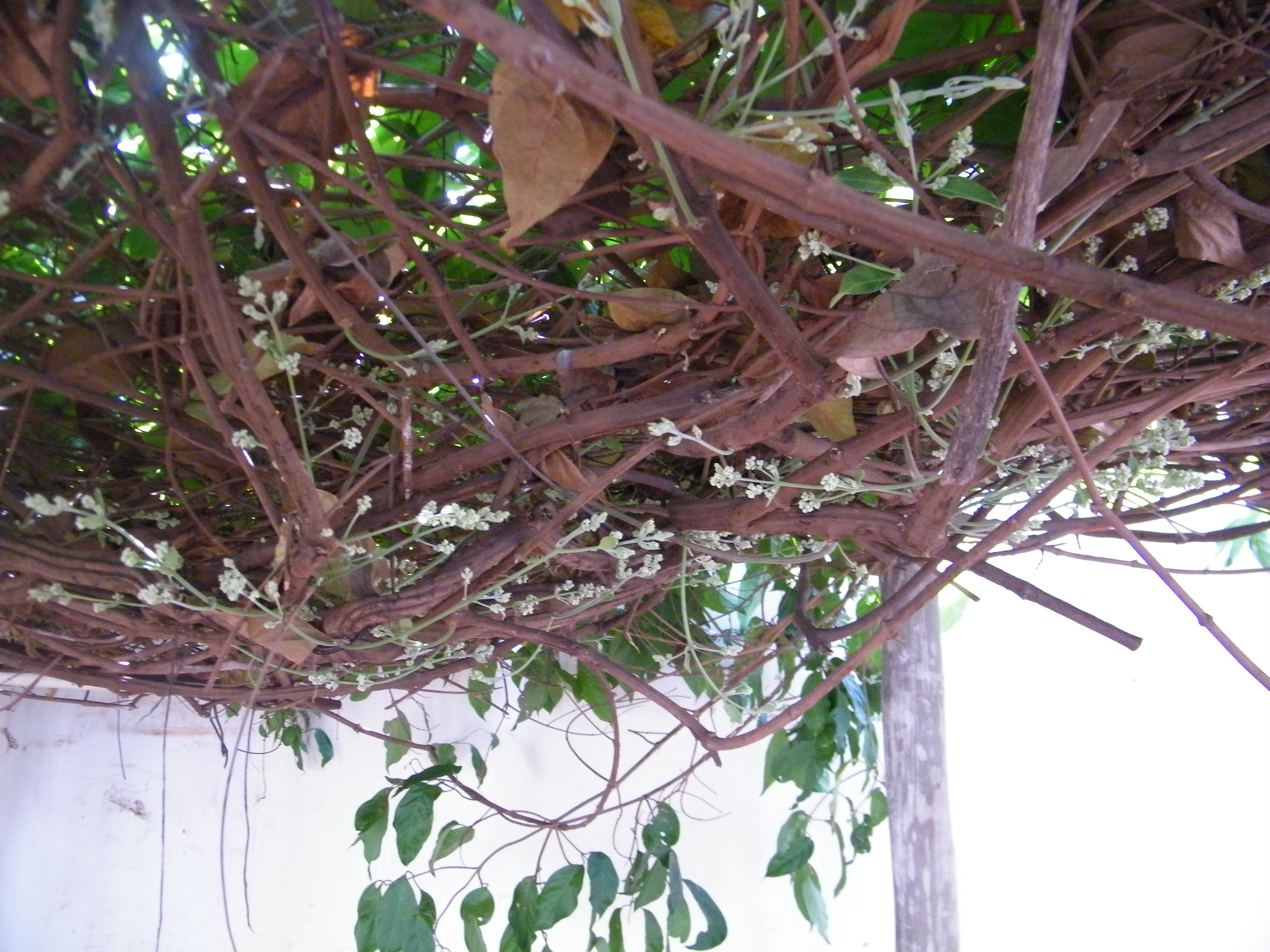 Florada Julho 2015 - 03.JPG