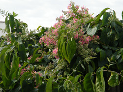 Florada Julho 2015 - 05.JPG