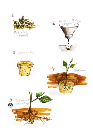 Kompostierbarer Topf (Konzept) 2017