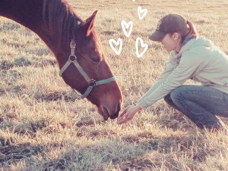 5 Ways to Make Your Horse Your Valentine