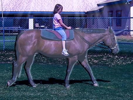 Katie's Unicorns - Lady & Poco