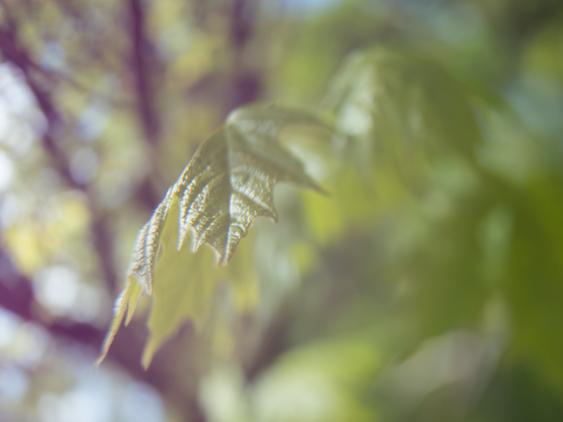 Leaf Free-lense