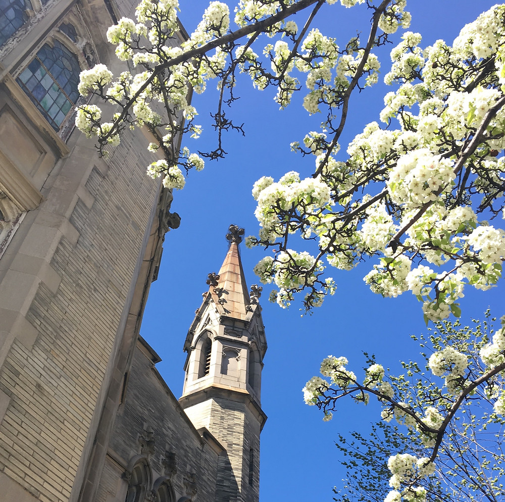 Spring flowers in Harlem