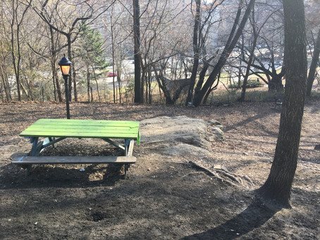 A new and improved dog run is coming to St. Nicholas Park