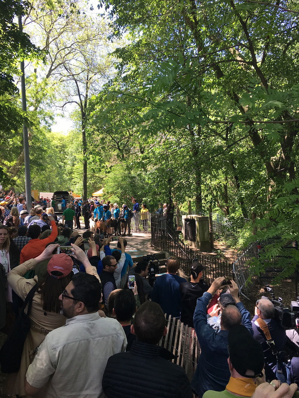 Reporters were there to see the goats released into the Riverside Park