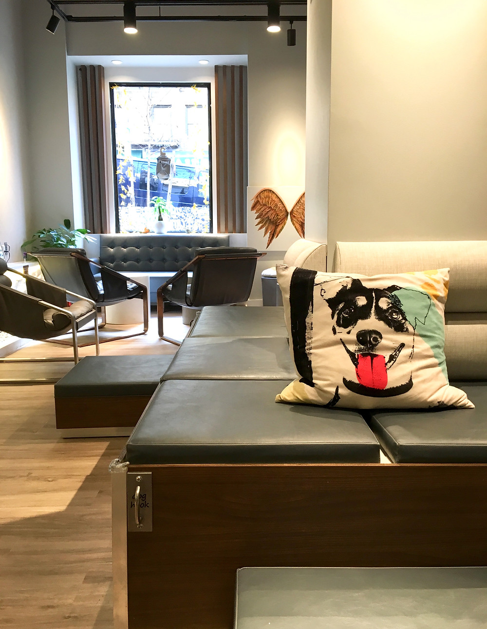 Cafe Bark, a new dog cafe in Washington Heights