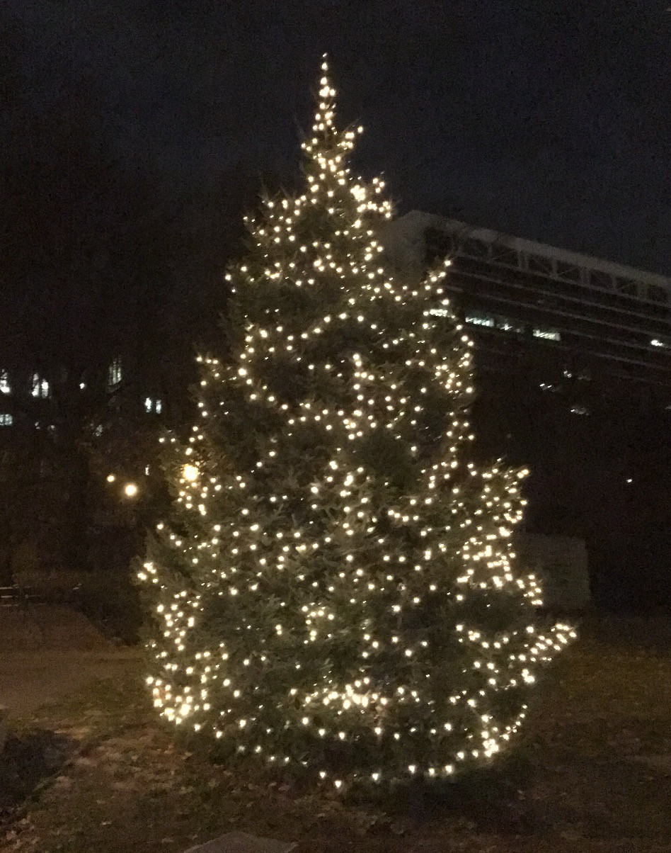 the holiday tree in St. Nicholas Park