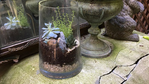 Learn how to make your very own terrarium at this pop-up workshop