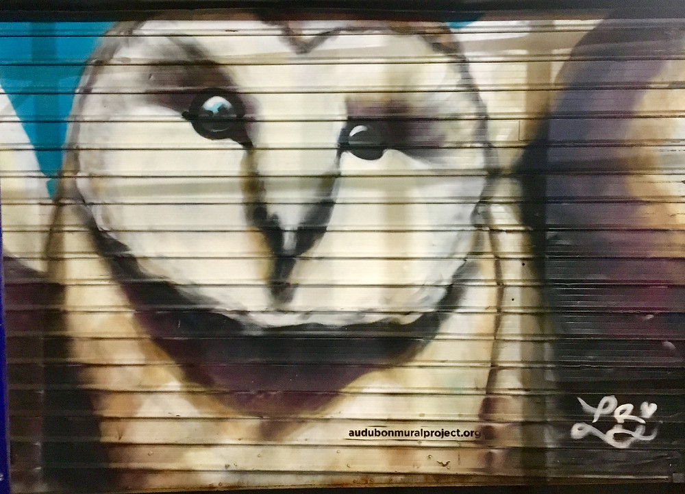 Owls real and imagined can be found throughout Upper Manhattan