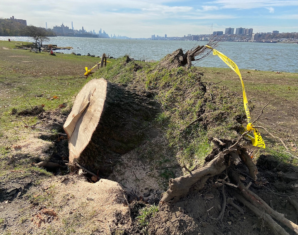 Trees uprooted in Fort Washington Park after tornado warnings