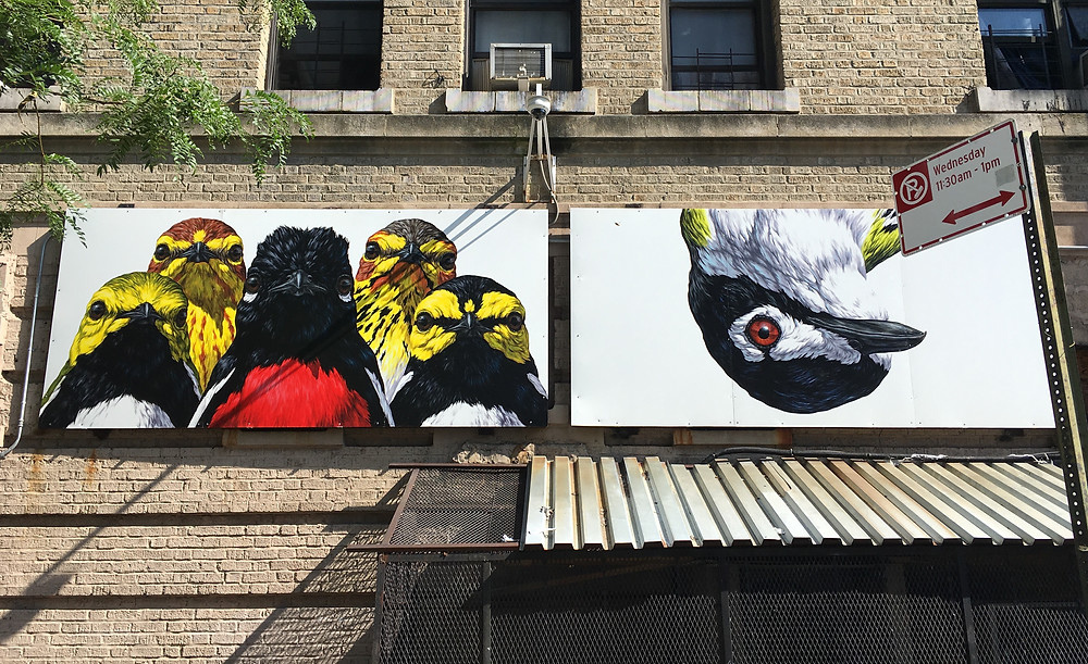 George Boorujy's gang of warblers and Black-Capped Vireo for the Audubon Mural Project