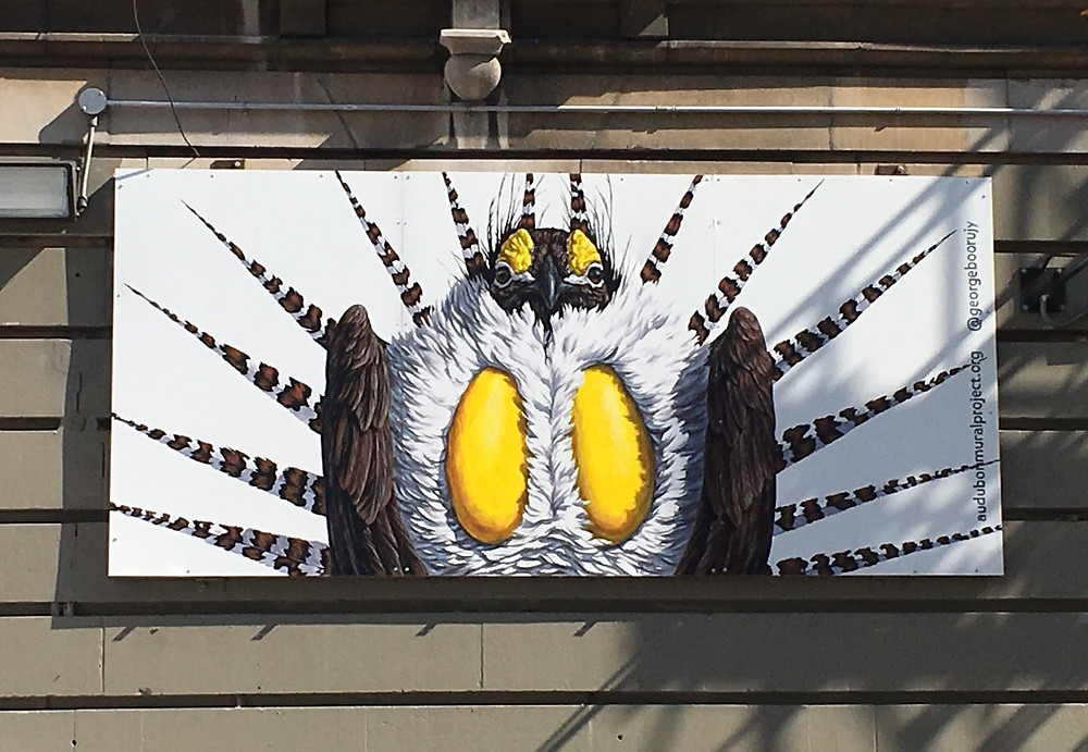George Boorujy's Greater Sage Grouse for the Audubon Mural Project