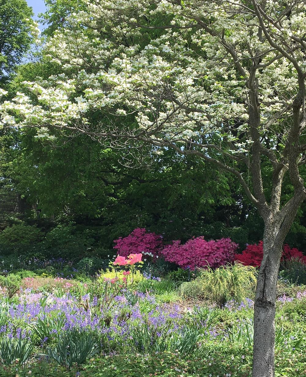 Heather Garden in Fort Tryon Park