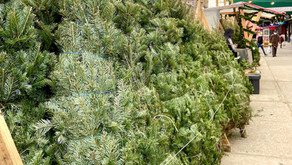 The first Christmas trees have arrived in Harlem