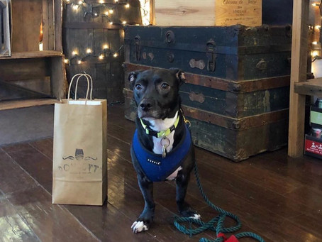 See which Harlem spots this cute pup wants you to support during the lockdown