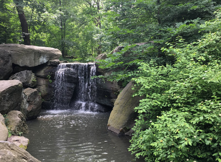 """Here's the perfect spot to go """"forest bathing"""" in Central Park"""