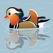 MandarinDuck.jpg