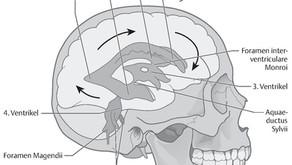 Das craniosacrale System