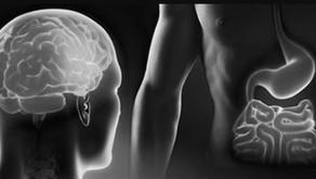 Das Bauchirn - Die Intelligenz der Körpermitte