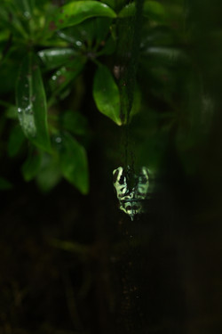 mini frog reflection