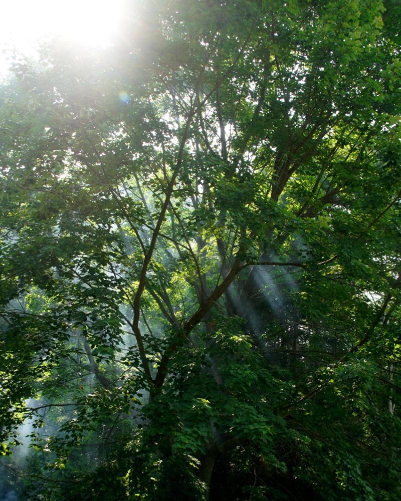 nature brilliant light
