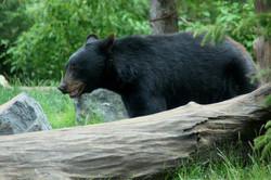 mini bear 2