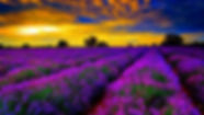 Lavender-Purple-images-free-download-620