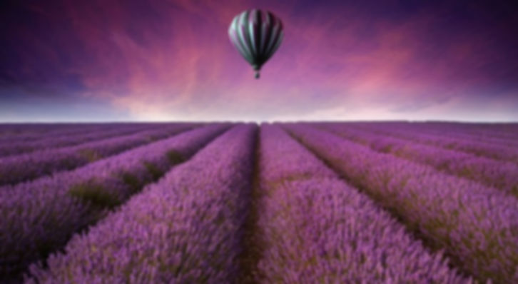 Nature-landscape-purple-field-of-flowers