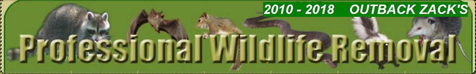animal-removal-orange-county-outbackzack