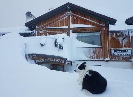 Prima neve Ski Area Campiglio Folgarida Marilleva Daolasa