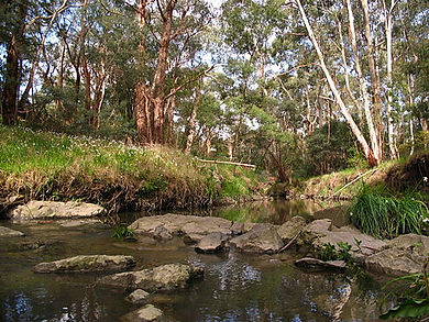 500px-Mullum_Mullum_Creek_in_Mitcham.jpg