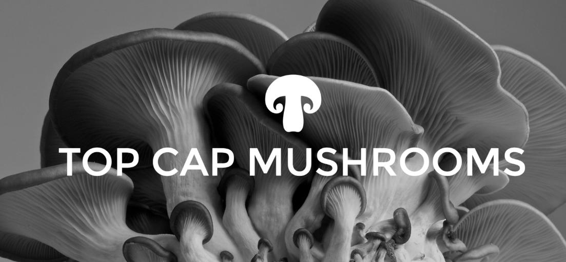 Top Cap Mushrooms